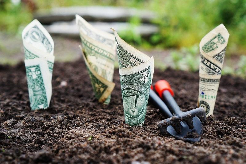 Plantando dinheiro